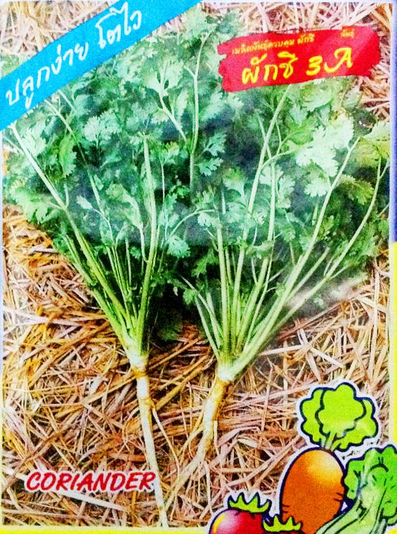 เมล็ดพันธุ์ผักชี 10กรัม(870เมล็ด)