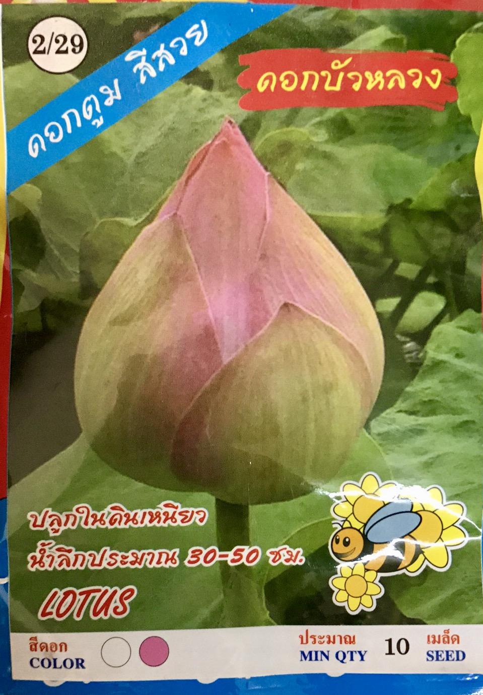 ดอกบัว (10เมล็ด)