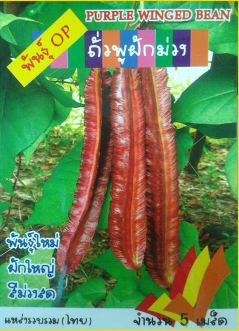 ถั่วพูสีม่วง(5เมล็ด)