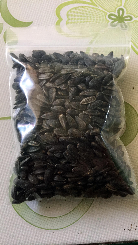 เมล็ดทานตะวันงอก 1กิโล(เมล็ดดำ)