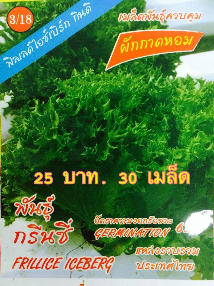 สลัดฟิลเล่ย์ (lettuce Frillice) 30เมล็ด