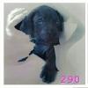 สติกเกอร์ 3D หมาดำ