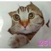 สติกเกอร์ 3D แมว