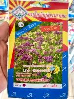 ดอกเวอร์บีน่า verbena 400เมล็ด