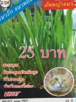เมล็ดพันธุ์หญ้าแมว 200เมล็ด