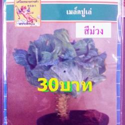 เมล็ดพันธุ์ปูเล่ สีม่วงใบใหญ่(70เมล็ด)
