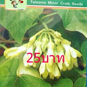 ดอกสลิด (ขจร) 10เมล็ด