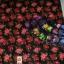 ผ้าถุงคอตต้อน-ลายดอกไม้ thumbnail 1