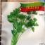 เมล็ดพันธุ์ขึ้นฉ่าย ซองเล็ก ประมาณ 1000เมล็ด thumbnail 1