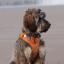 POD Tracker 3 GPS Tracker ค้นหาสัตว์เลี้ยงสำหรับแมวและหมา thumbnail 9