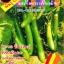 มะเขือยาวสีเขียว thumbnail 1