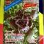 เมล็ดพันธุ์ปูเล่สีม่วง อเมริกา (20เมล็ด) thumbnail 1