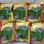 เมล็ดผักบุ้งใบไผ่(1 กก.) สั่งได้ไม่เกิน 2 กิโลต่อออเดอร์ เนื่องจากสินค้ามีน้ำหนักมาก thumbnail 1