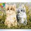 รหัส HB4050209 ภาพระบายสีตามตัวเลข Paint by Number แบบ Lovely Cats ขนาด40x50cm/พร้อมส่ง thumbnail 1