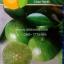 มะนาว(15-20 เมล็ด) thumbnail 1
