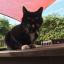 POD Tracker 3 GPS Tracker ค้นหาสัตว์เลี้ยงสำหรับแมวและหมา thumbnail 13