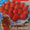 มะเขือเทศเชอรี่(ราชินี) 30เมล็ด