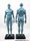 [ผู้ชาย] แบบจำลองร่างกายมนุษย์สูง30เซน (สีเทา)
